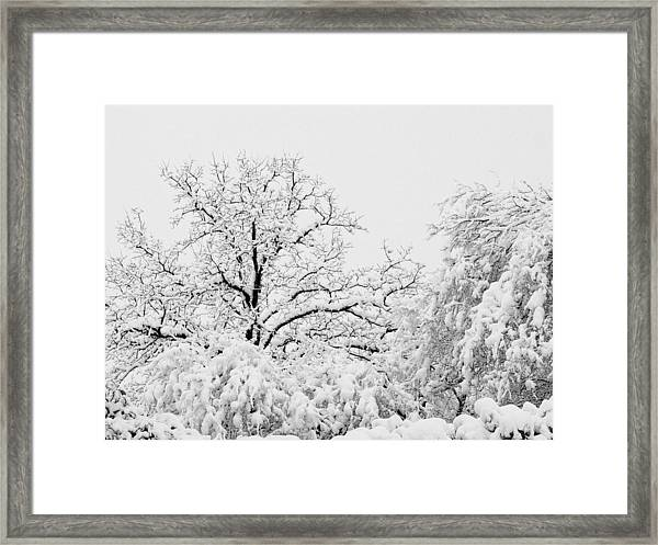 Tree Snow Framed Print