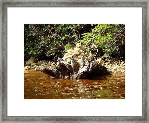 Tree Stump Filled With Rocks Framed Print