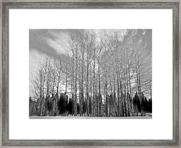 Tree Sweep Framed Print