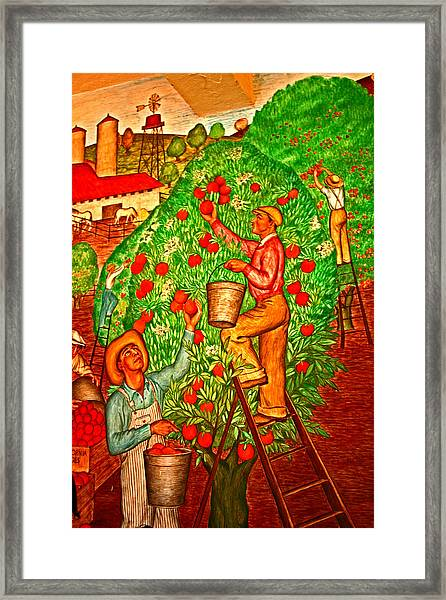 Tree Top Harvest Framed Print