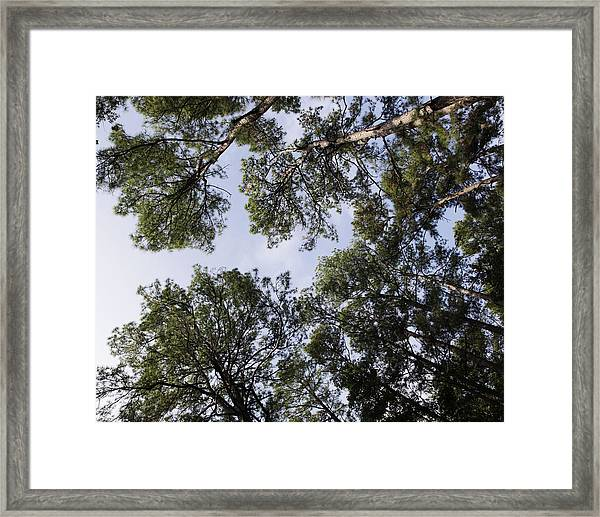 Tree Tops Framed Print