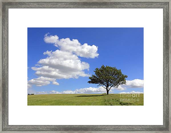 Tree With Clouds Framed Print
