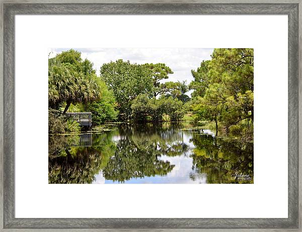 Treeflections Framed Print