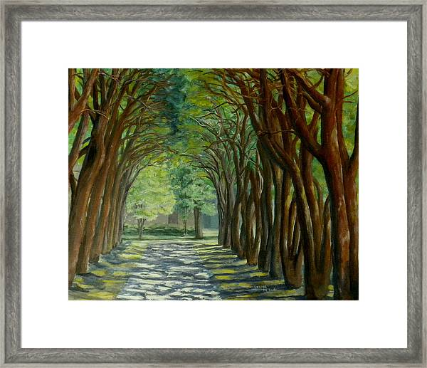 Treelined Walkway At Lsu In Shreveport Louisiana Framed Print