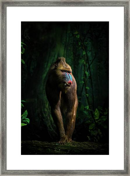 Trees And Beasts! Framed Print