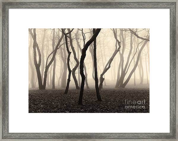 Trees And Fog No. 1 Framed Print