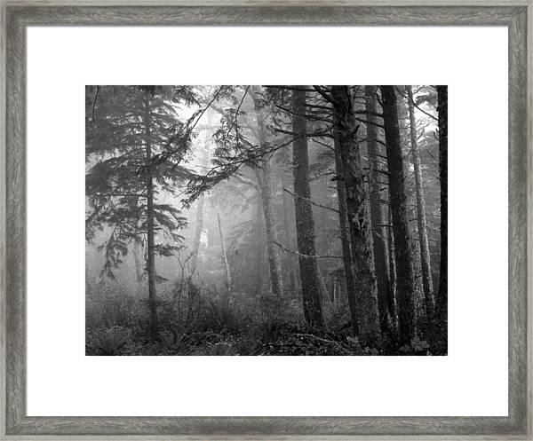 Trees And Fog Framed Print