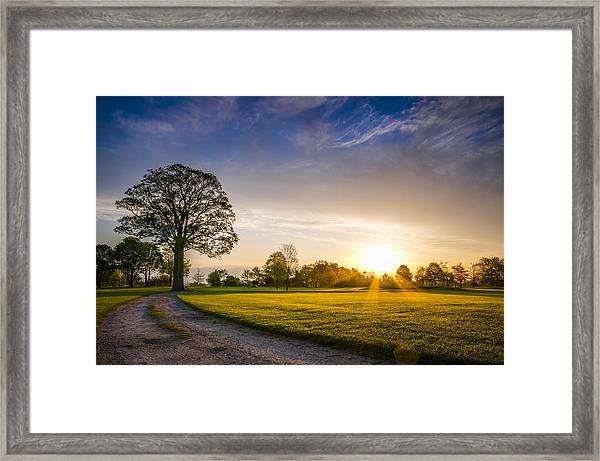 Trees At Dawn On Golf Course Framed Print