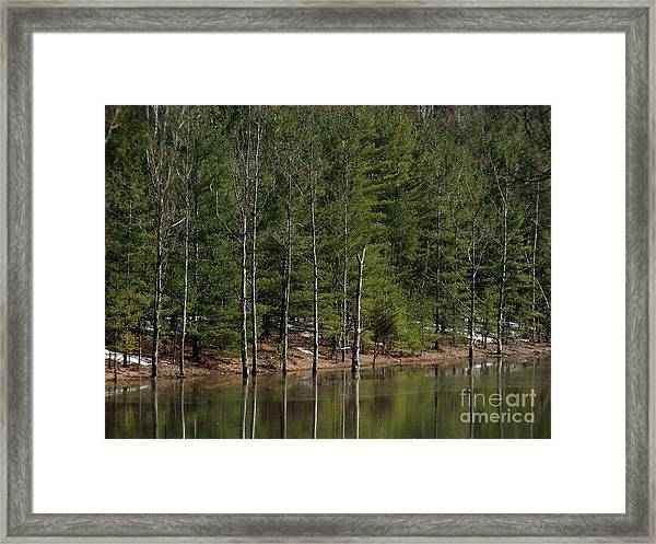 Trees At The Reservoir Framed Print