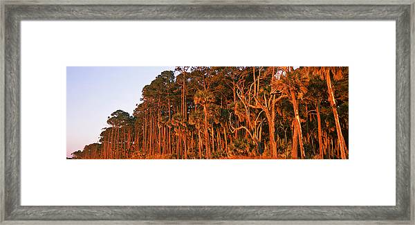 Trees, Hunting Island State Park Framed Print