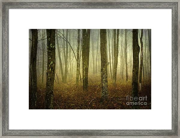 Trees II Framed Print