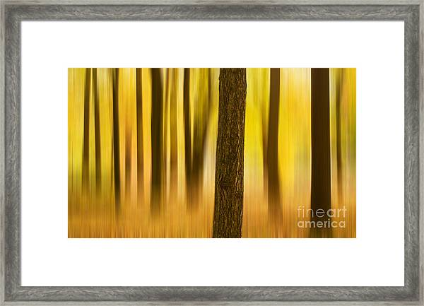 Trees In Autumn Forest Framed Print