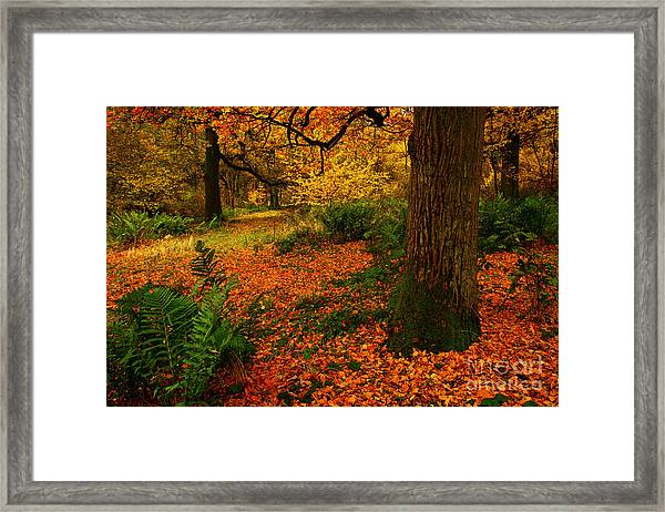 Trees In Autumn Woodland Framed Print