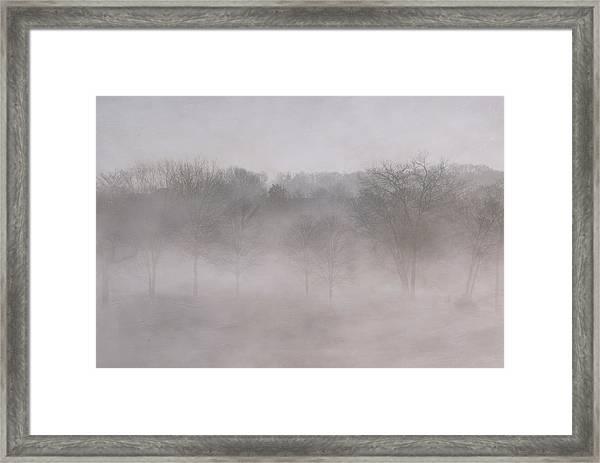 Trees In Fog Framed Print by Carol Erikson
