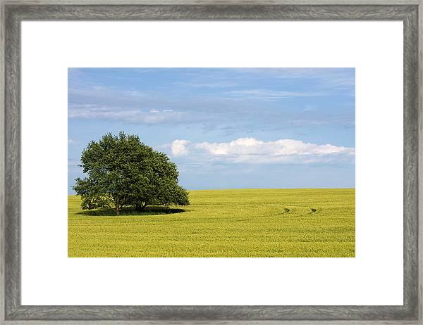 Trees In Wheat Field Framed Print