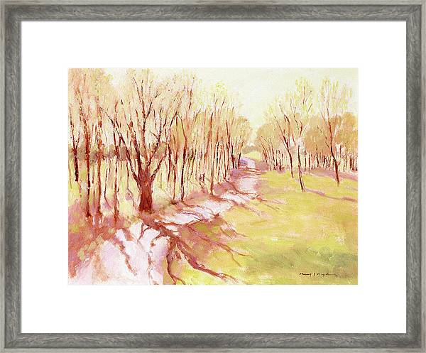 Trees4 Framed Print