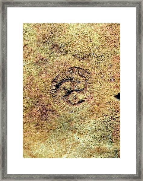 Tribrachidium Fossil Framed Print by Sinclair Stammers/science Photo Library