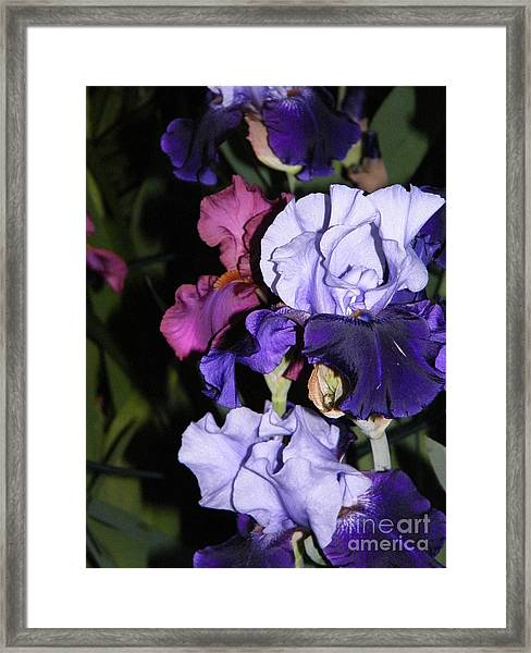 Tricolor Night Blossoms Framed Print