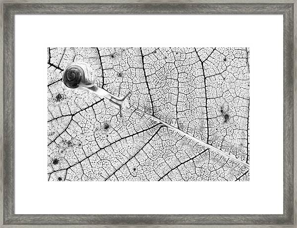 Tr@nsparences Framed Print by Fabien Bravin