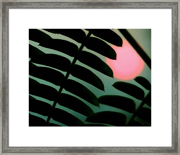 Tropic Of Capricorn Framed Print