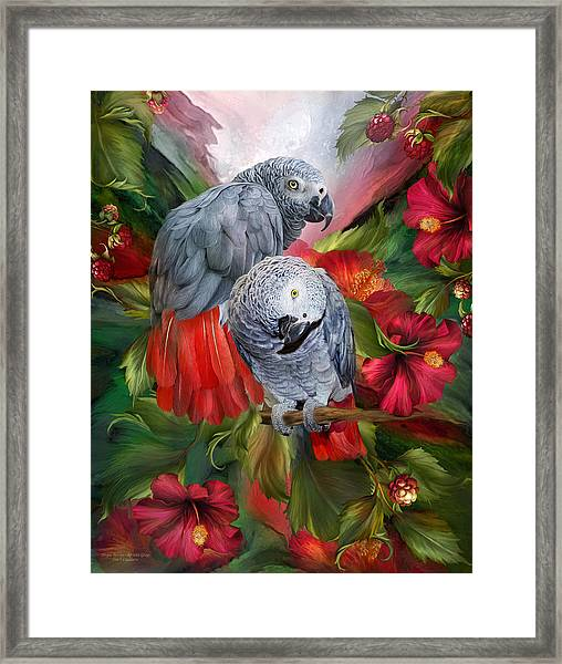 Tropic Spirits - African Greys Framed Print