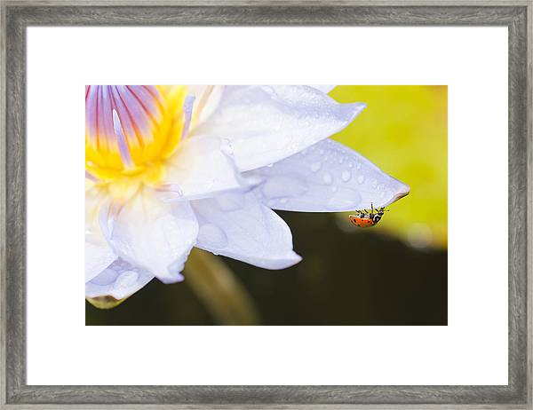Framed Print featuring the photograph Tropical Adventure by Priya Ghose
