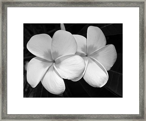Tropical Beauty Framed Print