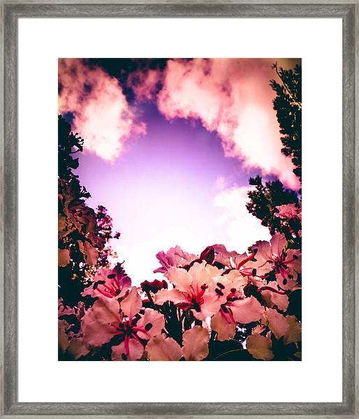 Tropical Dream Framed Print