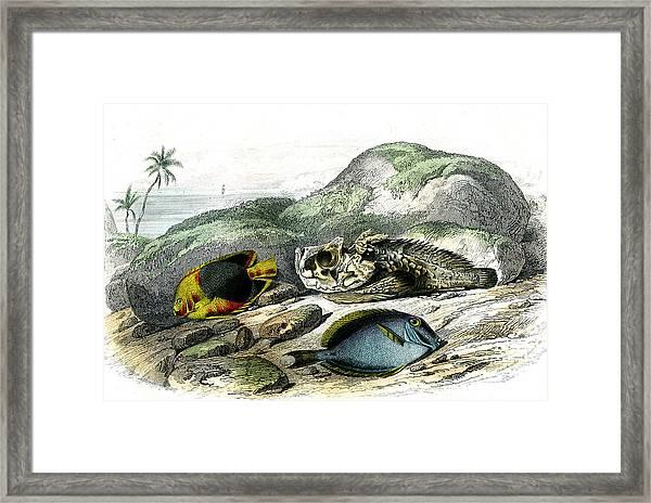 Tropical Fish Framed Print