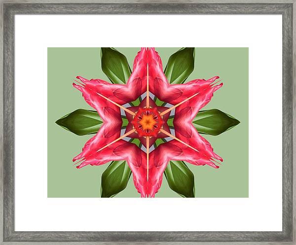 Tropical Flower Mandala Framed Print