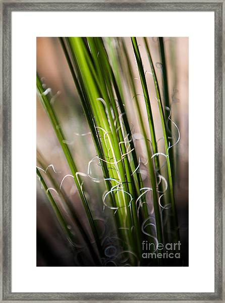 Tropical Grass Framed Print