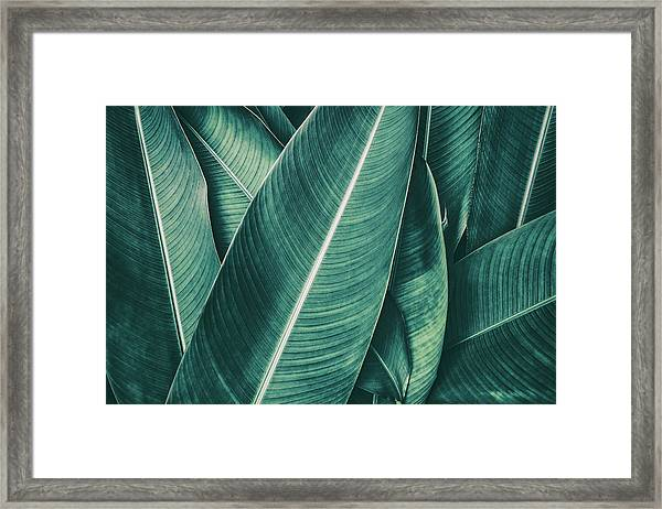 Tropical Palm Leaf, Dark Green Toned Framed Print