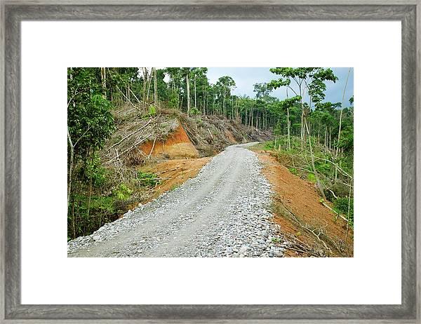 Tropical Rainforest Road Construction Framed Print