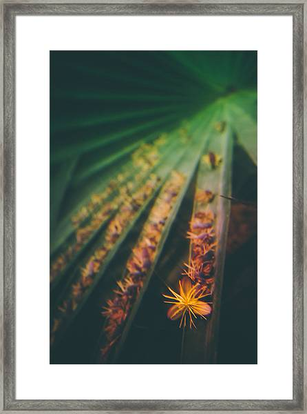 Tropical Ray  Framed Print