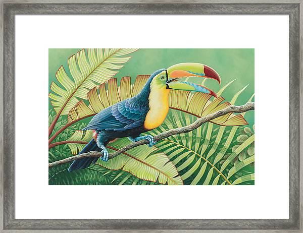 Tropical Toucan Framed Print