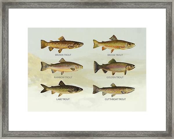 Trout Species Framed Print