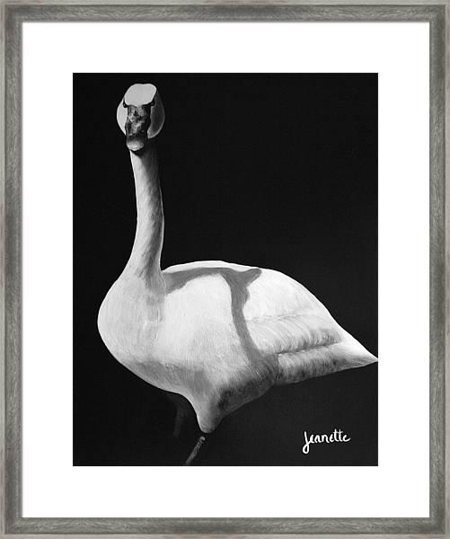 Trumpeter Swan Framed Print