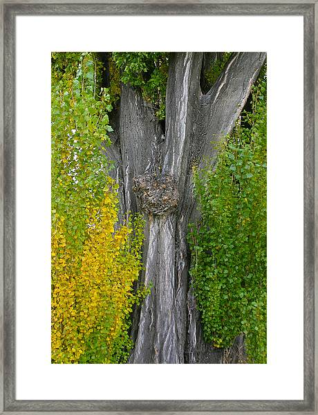 Trunk Lines Framed Print