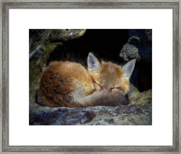 Fox Kit - Trust Framed Print