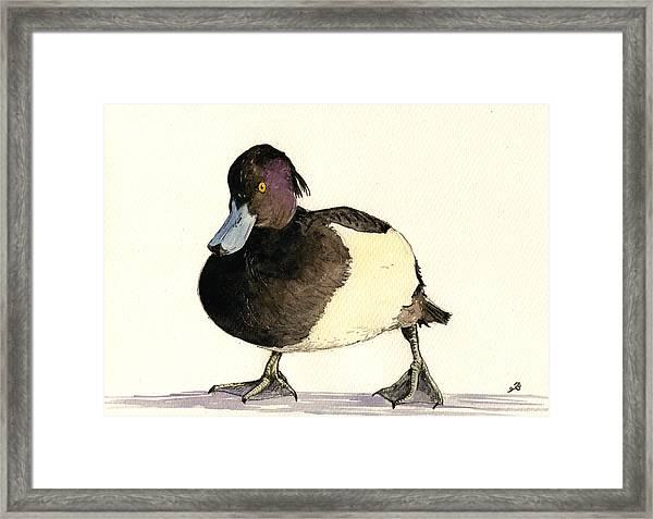Tufted Duck Framed Print by Juan  Bosco