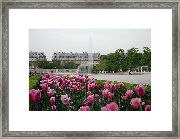 Tuileries Garden In Bloom Framed Print