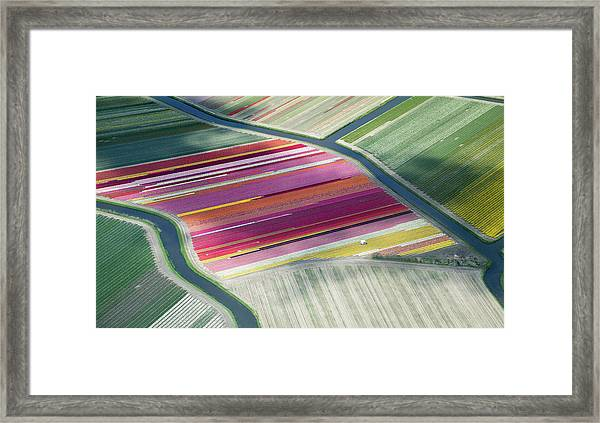 Tulip Fields, Aerial View, South Framed Print