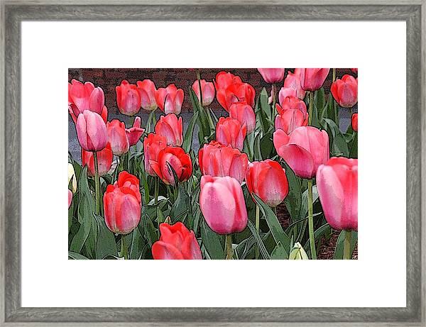 Tulip Flower Art05 Framed Print