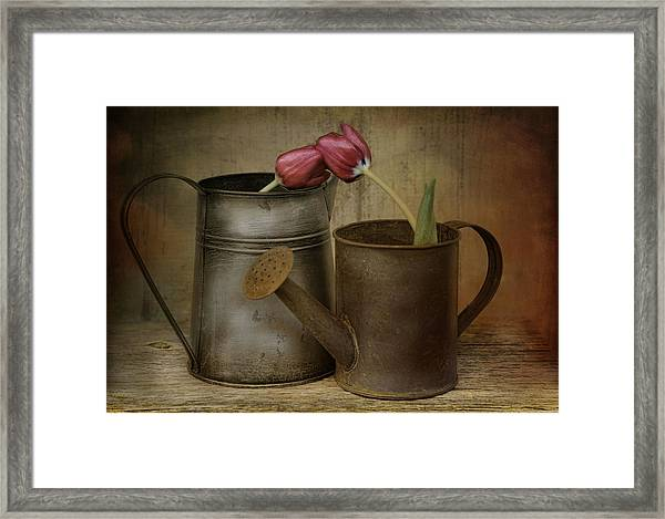 Tulip Tales Framed Print