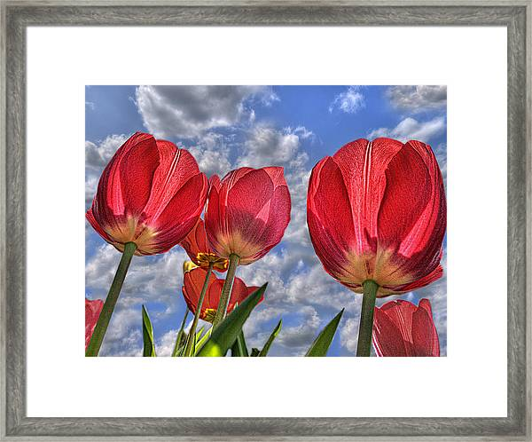 Tulips Are Better Than One Framed Print