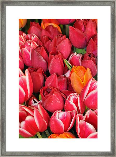 Tulips In Pike Place Market Framed Print