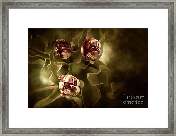 Tulips In The Mist II Framed Print