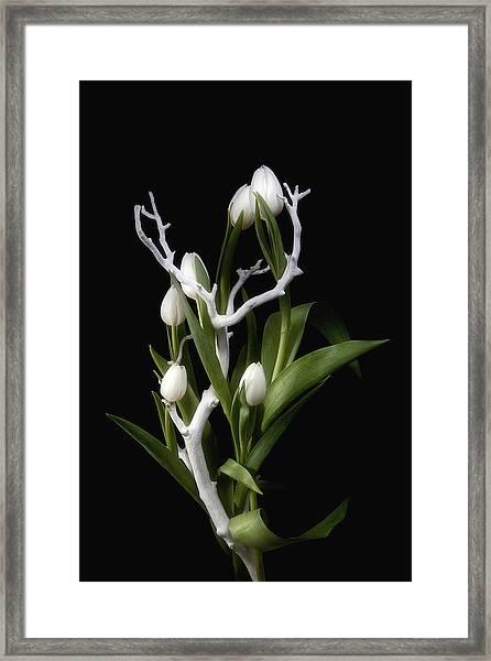 Tulips In Tree Branch Still Life Framed Print
