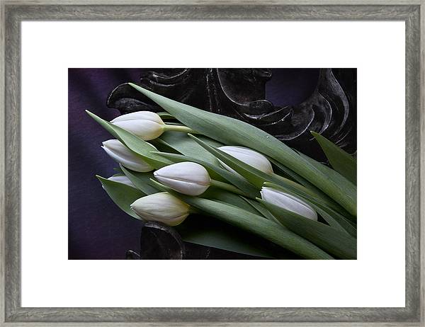 Tulips Laying In Wait Framed Print
