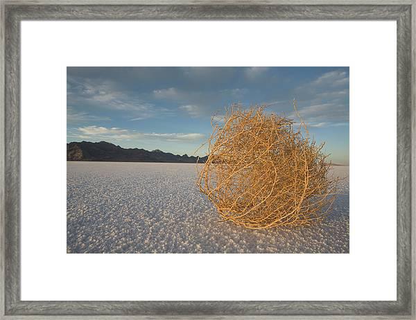 Tumbleweed On The Bonneville Salt Framed Print by John Burcham